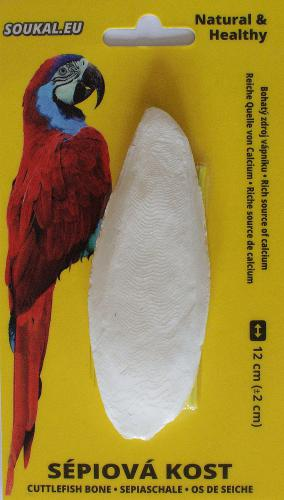 Sépiová kost na kartì cca 12 cm
