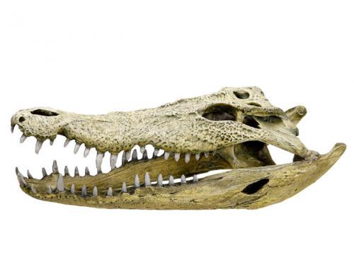 Nobby akvarijní dekorace kostra krokodýl 47,5 x 20,5 x 16 cm