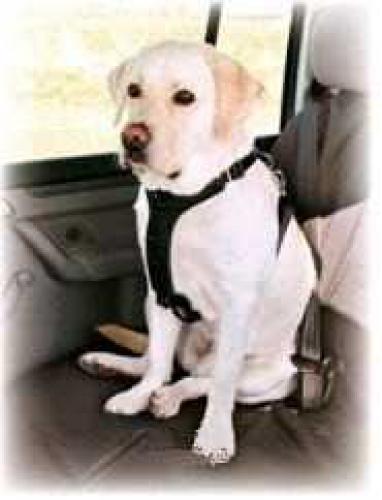 Postroj pro psa do auta Trixie M 50-70 cm