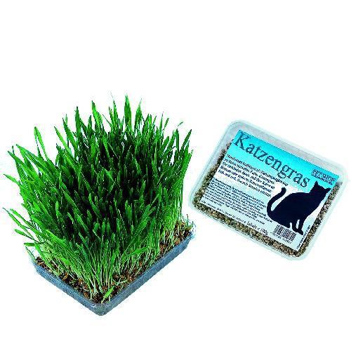 Nobby tráva pro koèky v plastu 100g