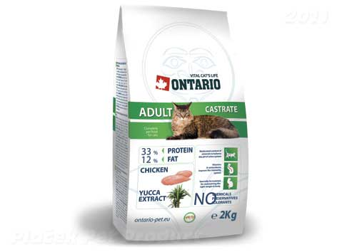 ONTARIO cat CASTRATE - zvìtšit obrázek